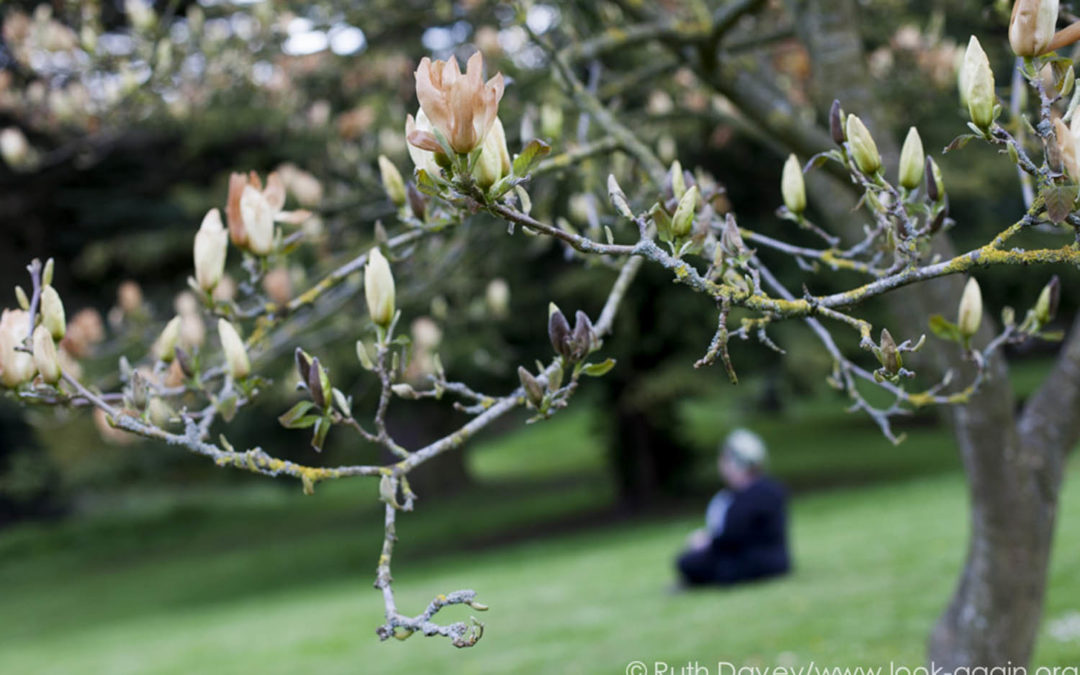 Finding Focus: Photography for Wellbeing